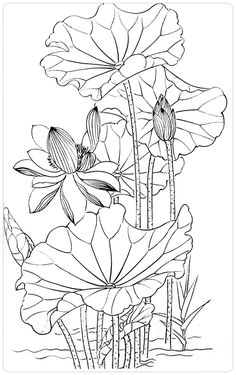 Calla Lily Bouquet Coloring Pages Lotus Kunst, Lotus Art, Line Drawing, Drawing Sketches, Art Drawings, Flower Drawings, Lotus Painting, Fabric Painting, Chinese Painting