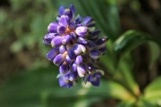 Conheça algumas das flores mais exóticas do mundo - Casa