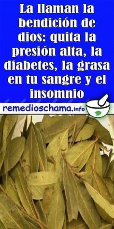 La llaman la bendición de dios: quita la presión alta, la diabetes, la grasa en tu sangre y el insomnio - Remedios Chama
