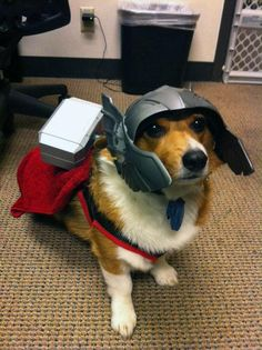 I normally don't like animals in costumes... but this is too awesome. #Cosplay #Thor