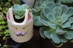 Mini maceta #gatita #cat