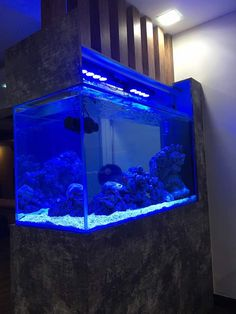 Pin By Norman Ashby On Living Art Aquarium Concept | Pinterest | Live Art  And Aquariums