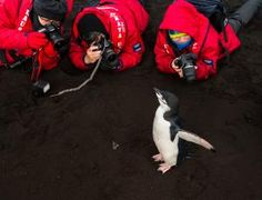 Antarctic tourism may pose disease threat to penguins | New Scientist