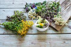 Les plantes médicinales peuvent être récoltées dans votre jardin : menthe, estragon, angélique, ciboulette, persil, aspérule odorante...