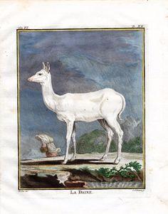 1766 Buffon Quarto Edition White Doe Color Plate Antique Animal Print | eBay