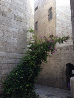 Lovely architecture in Old Jerusalem Israel Trip, Israel Travel, Jerusalem, Architecture, Arquitetura, Architecture Design