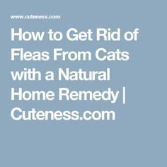 How to Get Rid of Fleas From Cats with a Natural Home Remedy | Cuteness.com