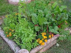 How to build your own organic garden (anywhere) and save money! | GoddessLife Blogpost