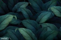 New Wallpaper Pattern Green Tropical Ideas Fond Design, Web Design, Leaf Background, Background Patterns, New Wallpaper, Pattern Wallpaper, Tropical Wallpaper, Leaves Wallpaper, Adobe Illustrator