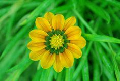 https://flic.kr/p/rR7kc7 | Do you like me? As a flower... | M'aimes-tu? En tant que fleur...