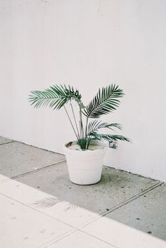 Flowers Pretty Plants 23 Ideas For 2019 Decoration Photo, Decoration Inspiration, Creative Inspiration, Planet Decor, Potted Palms, Cactus E Suculentas, Plants Are Friends, Green Accents, Green Life