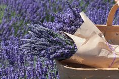 . Lavender, Simple