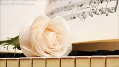 """Search Results for """"piano wallpaper rose"""" – Adorable Wallpapers Piano Keys, Piano Music, Piano Bar, Wallpaper 480x800, Motif Music, Wallpaper Rose, Piano Photography, White Piano, Rose Pictures"""