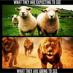 Lion of the tribe of Judah. Jesus already had His time as a Lamb. Funny Christian Memes, 12 Tribes Of Israel, Tribe Of Judah, Bride Of Christ, Lion Of Judah, Prayer Warrior, Spiritual Warfare, King Of Kings, Christianity