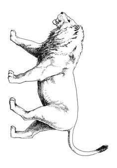 7 Best Kleurplaten Ijstijd Images Cool Coloring Pages Ice Age