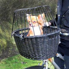 Sichert euch kostenlose Gutscheine für Zooplus: http://www.sparwelt.de/gutscheine/zooplus?utm_source=pinterest&utm_medium=pin&utm_campaign=gutschein_ zooplus