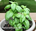 Live longer and better with these five immortality herbs | Natural News