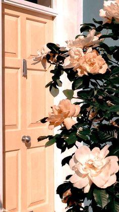Wallpaper rose white wallpaper on Wallpaper Rose, Tumblr Wallpaper, Screen Wallpaper, Wallpaper Backgrounds, Hipster Phone Wallpaper, Aesthetic Pastel Wallpaper, Aesthetic Backgrounds, Aesthetic Wallpapers, Aesthetic Painting