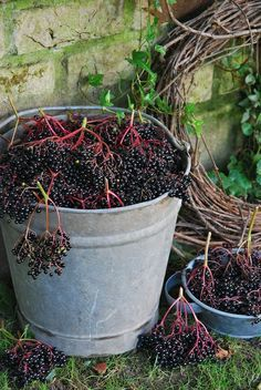 Elderberry: Nature's Secret To Good Health by Tiffany Corkern Elderberries for jam, wine, syrup. Fruits Decoration, Nature Secret, Farms Living, Down On The Farm, Elderflower, Fruits And Veggies, Country Living, Country Life, Vegetable Garden