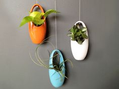 Aerium Egg Planters by Sprout Home