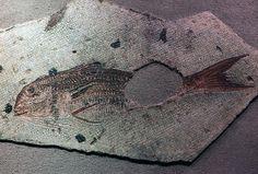 Roman mosaic: a fish by ortygia, via Flickr