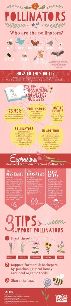 Who are the pollinators, why are they important to us and what should we be doing to protect them? #DIY4Bees