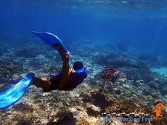 chasing sea turtles at Apo Island Visayas, Sea Turtles, Underwater, Diving, Shots, Island, Adventure, World, Outdoor Decor
