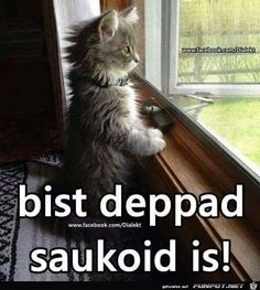 bist du bloed es ist saukalt bist du bloed es ist saukalt The post bist du bloed es ist saukalt appeared first on Erdbeer Rezepte. Funny Animal Memes, Cat Memes, Funny Cats, Funny Animals, Cute Animals, Cool Pictures, Funny Pictures, Pet Day, Gentle Giant