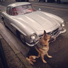 Not touch my car . Mercedes-Benz 300SL Gullwing W198 By @salar_sh #germany…