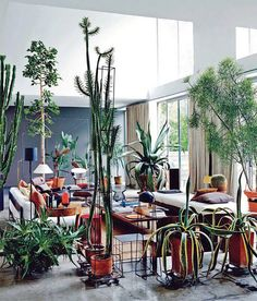 Cacti and houseplants in the home and the best ways to bring the outside in in your own home.