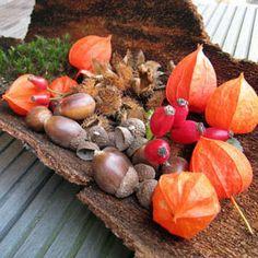 Herbstdekoration in Baumrinde