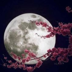 Full moon tonight. #maytheforcebewithyou #flowermoon #fullmoon #beautiful #moon #recordkeeper #lifeisageode #livefortoday #newbeginnings #universe #nature #photography http://tipsrazzi.com/ipost/1511925907823941192/?code=BT7cJpGjlZI