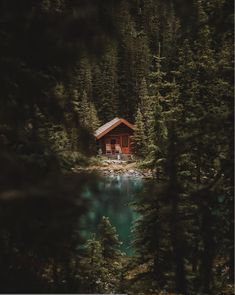 Travel in Tiny House Voyage en Tiny House sur Airbnb lien sur le profil on Airbnb - Link on the Profil Forest Cabin, Forest House, Forest Cottage, Lake Cabins, Cabins And Cottages, Yoho National Park, National Parks, Ideas De Cabina, Waking Up At 3am