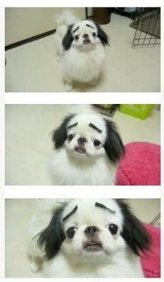 테이프 하나로 불쌍해진 강아지 사진 http://i.wik.im/91004