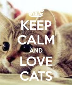 Image result for keep calm and love cats