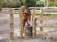 Automatic waterer set between fence posts. Add another spigot to the water line to attach a hose for filling water buckets in the run-in stalls.