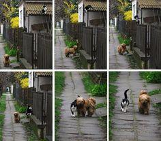 Este perro ha ido a la casa de su mejor amigo para recogerlo y dar un paseo juntos. Para una historia y para concienciar.