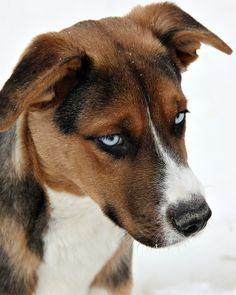 adopt. don't buy your next pet.