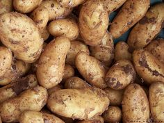 It's the end of the growing season for tubers - and you're probably wondering how to cure and store potatoes for long term storage. Curing potatoes is a simple Grow Potatoes In Container, Container Gardening Vegetables, Gardening Tools, Growing Vegetables, Fruits And Vegetables, Hobo Stew, Potato Storage, How To Store Potatoes, Raising Backyard Chickens