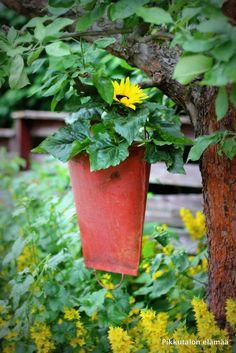 Pikkutalon elämää: Auringonkukkia