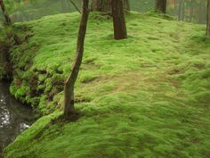 """Saihoji Moss Temple carpeted in moss. The temple, loacted in Kyoto is famous for its moss garden, is commonly referred to as """"Koke-dera"""" meaning """"moss temple"""""""