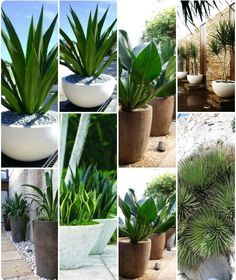 I like all of these plants. What attracts me is the large leaf and deep green color. I also like the bottom right for a grass type plant look. Outdoor Pots, Outdoor Gardens, Patio Plants, Indoor Plants, Garden Cottage, Garden Pots, Balinese Garden, Tropical Garden Design, Pot Jardin