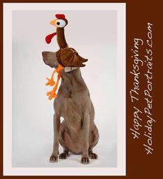 Dog wearing turkey on head