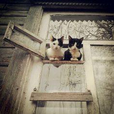 cat-in-windows:  (via @beatlegeyorgy | Websta (Webstagram))