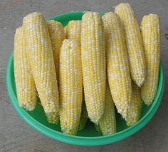 Peaches and Cream is the sweet corn we grow every year.  This years crop is the best ever.