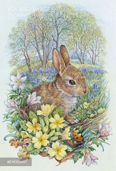 Young rabbit with tortoiseshell butterfly - PortForLio - Stock photos, Illustrations & Video footage Easter Paintings, Animal Paintings, Animal Drawings, Art And Illustration, Illustrations, Easter Bunny Pictures, Rabbit Art, Decoupage Vintage, Cutest Animals
