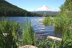Here is a beautiful view of Mt. Hood located in Oregon from the magnificent Trillium Lake. Enjoy the sights and recreation abound! Crater Lake National Park, National Parks, Trillium Lake, Mount Hood, Oregon Trail, Pacific Northwest, Tours, Dreams, Explore