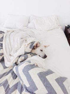 West elm comforter and a white German Shepard