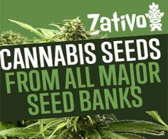 marijuana seedbank