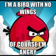 If I was a bird with no wings I would be angry too!